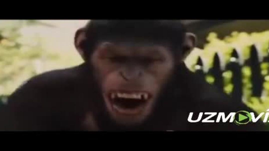 Маймунлар (Узбек тилида) / Maymunlar (Uzbek tilida) - Таржима кинолар