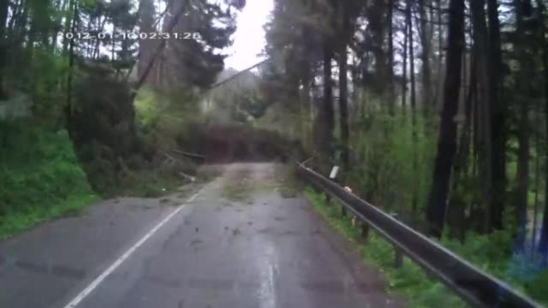 Лес упал на машину РОССИЯ